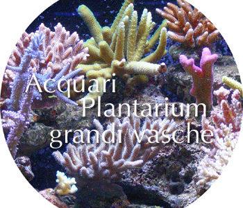 Acquari, plantarium e grandi vasche